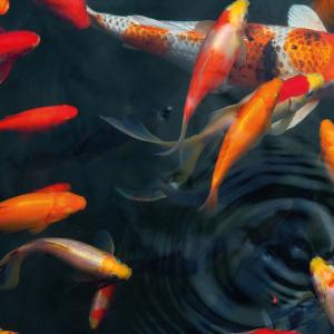 Aquarium & Ponds